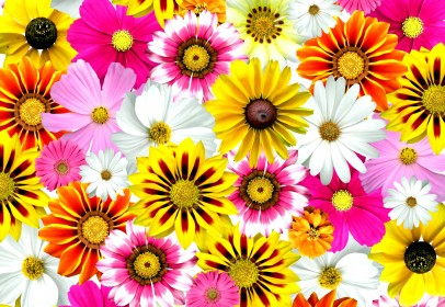 Floralni_flowers_colorful_summer